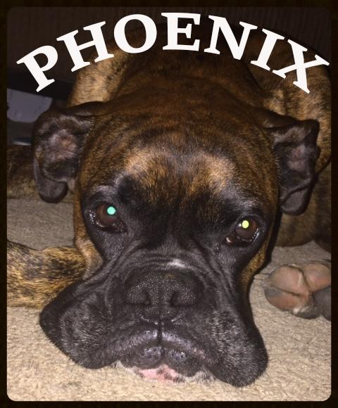 PHOENIX NEW.jpg