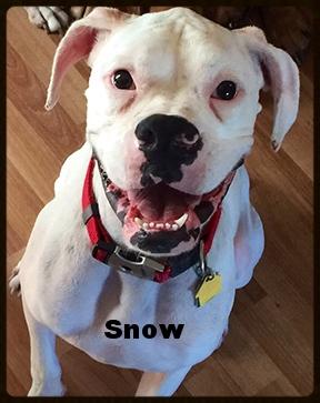 snow new 2.jpg