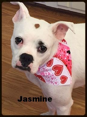 jasmine new 5.jpg