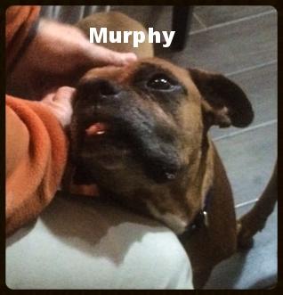 murphy new a 6.jpeg
