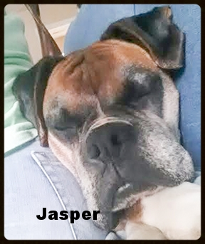 jasper new 1.jpg