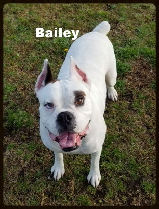 bailey new a.jpg