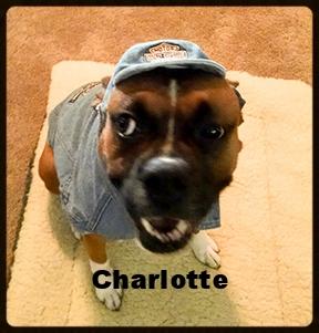 charlotte new 1.jpg