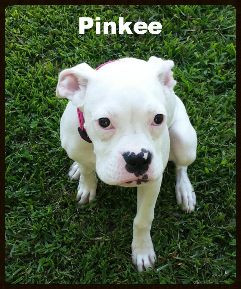 pinkee.png