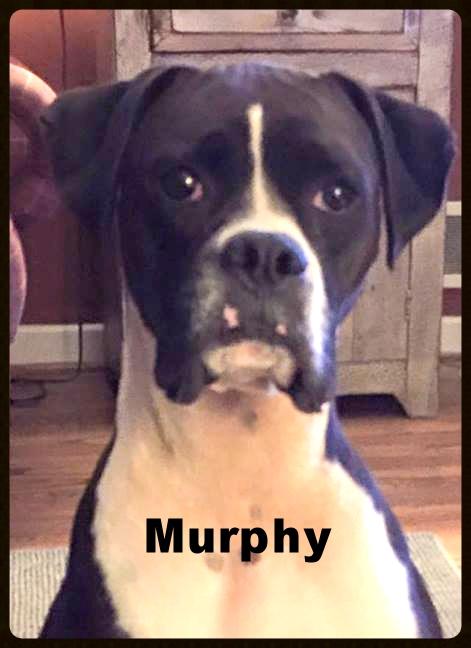 murphy new b.jpg