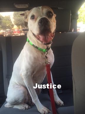 justice new.JPG
