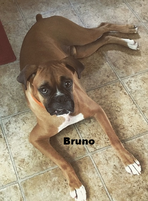 bruno4.jpg