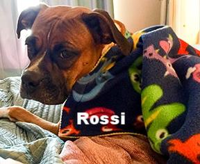 rossi+new+2.jpg