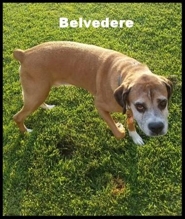 belvedere 1.jpg