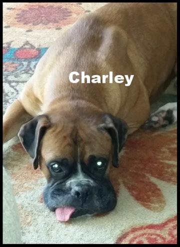 charley.JPG