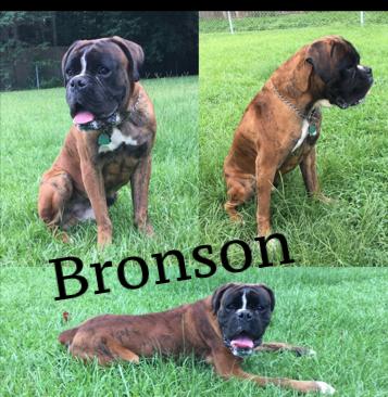 Bronson.PNG