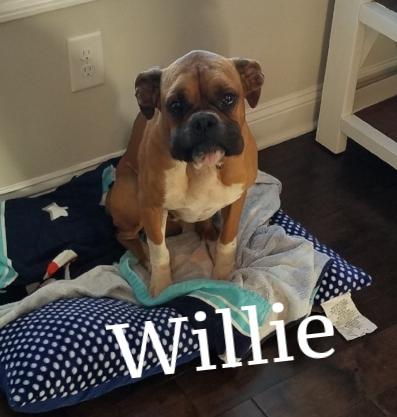 willie2.jpg