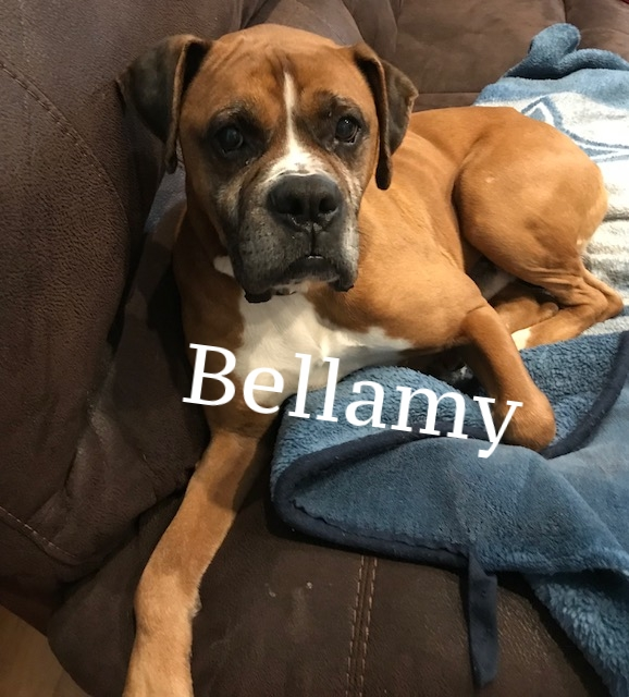 Bellamy2.jpeg