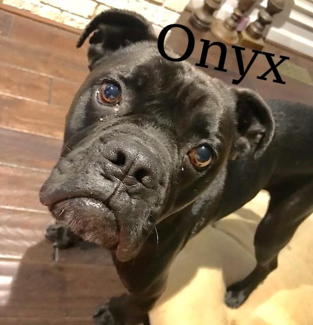 onyx2.JPG