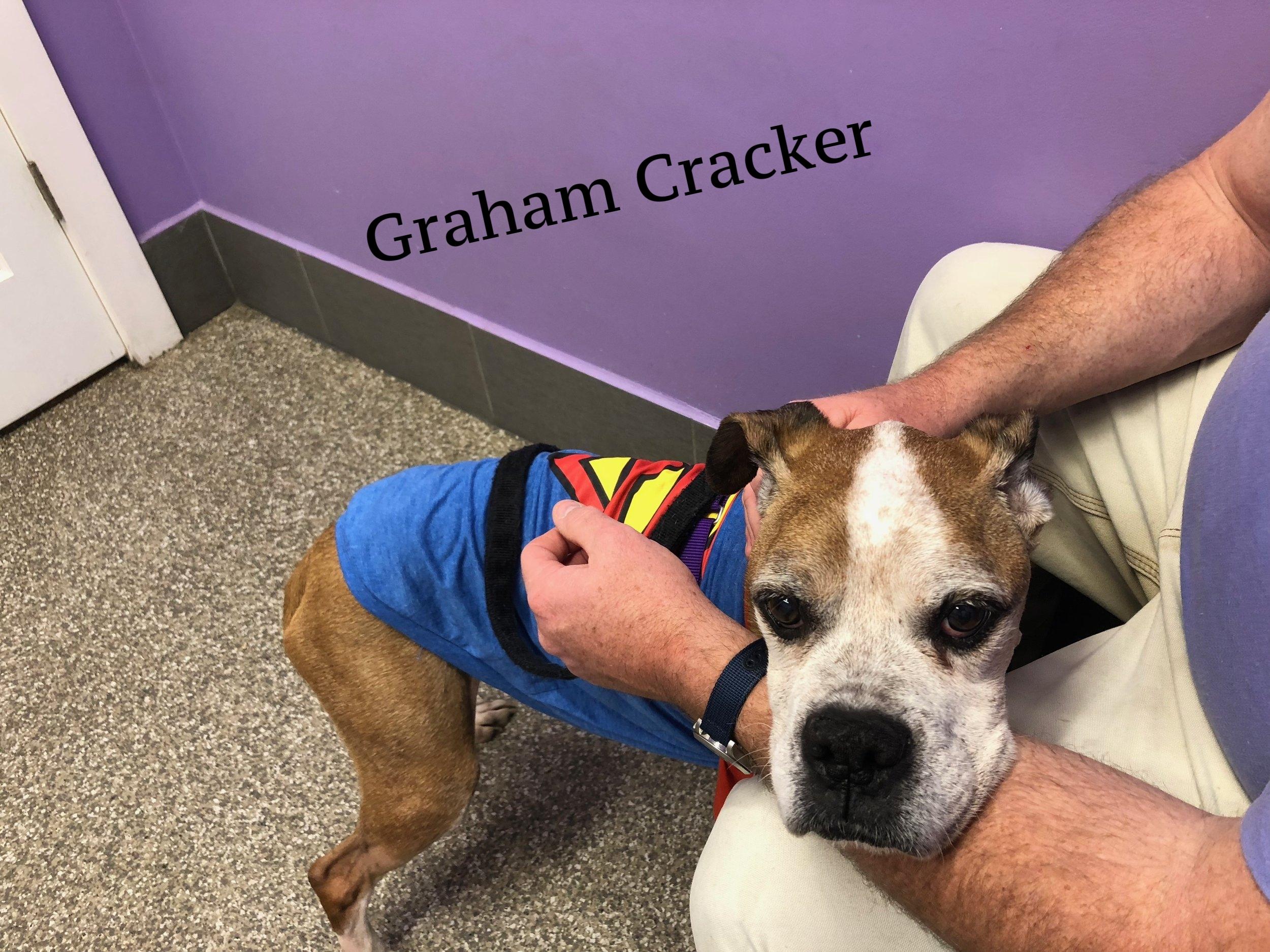 graham cracker.JPG