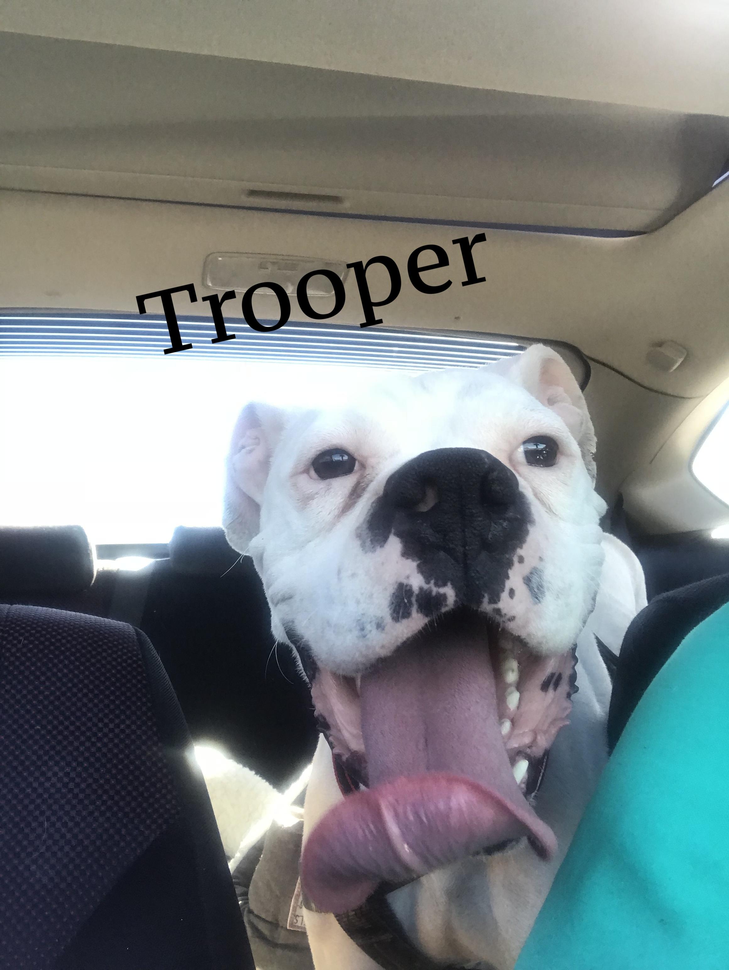 trooper.jpeg