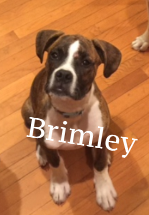 brimley.png