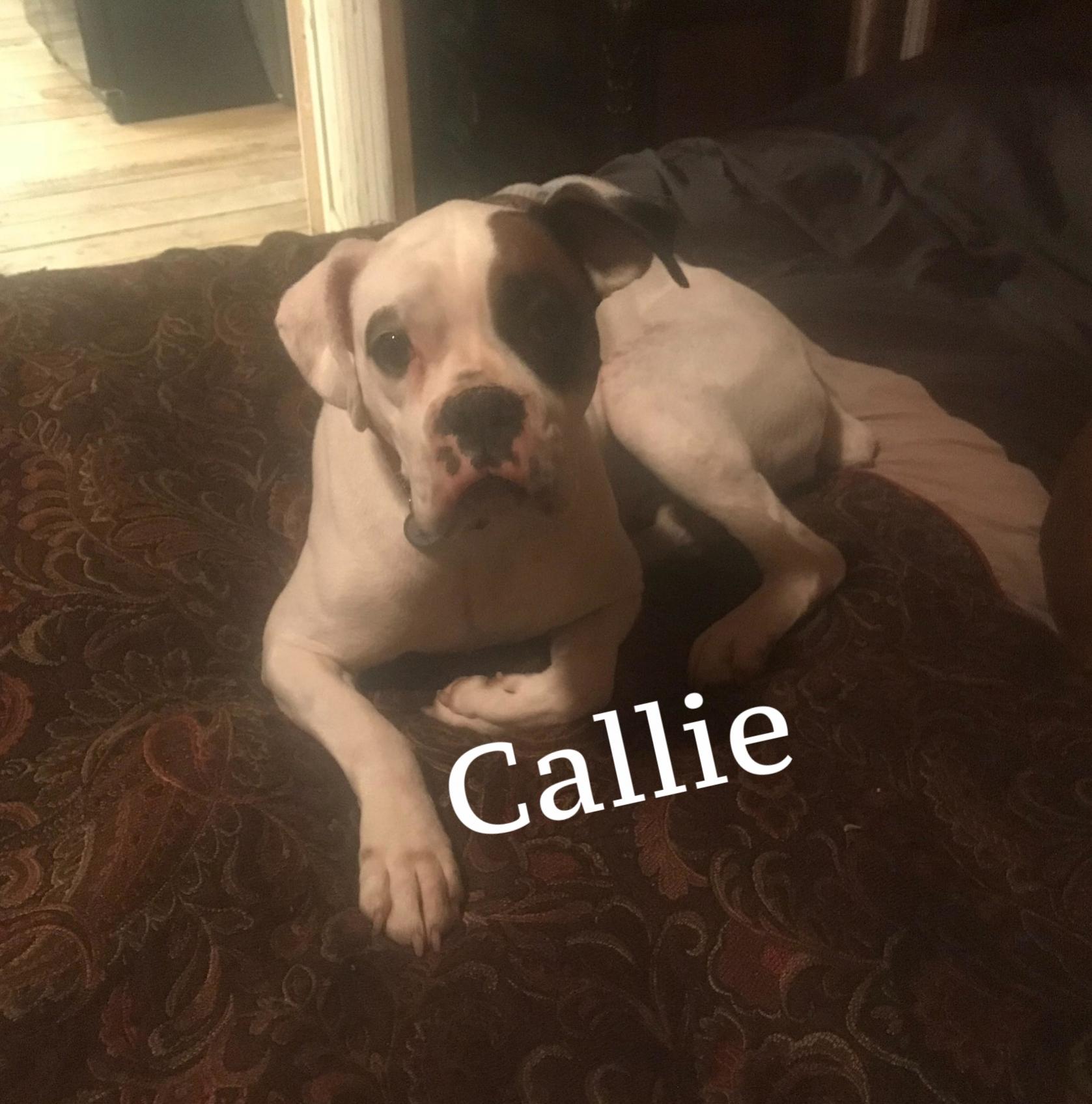 callie4.jpg