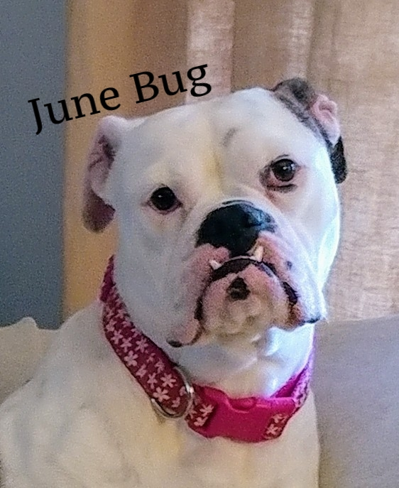 June bug.jpg
