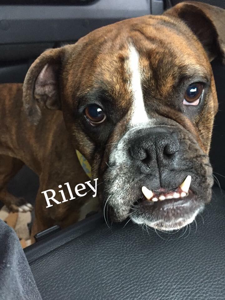 riley2.13.018.jpeg