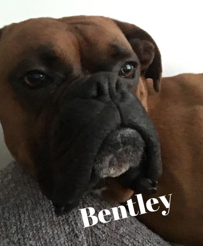 bentley am300.jpg