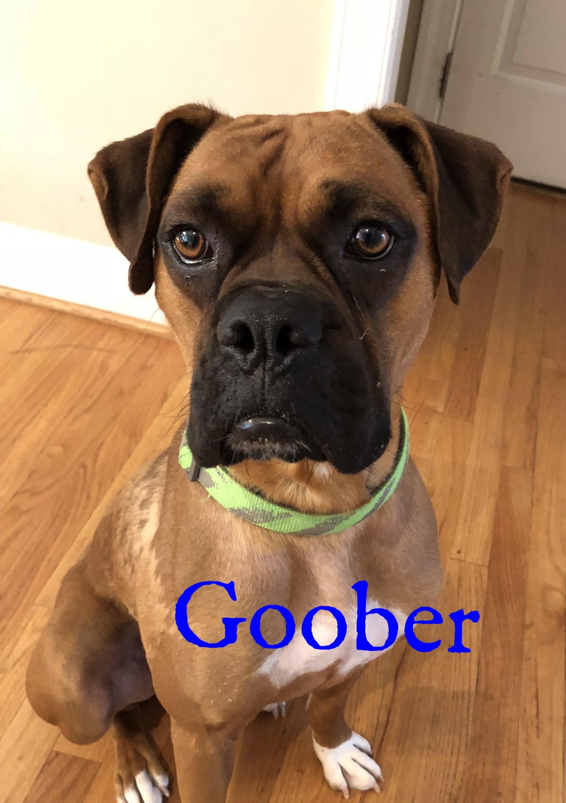goober2.jpg