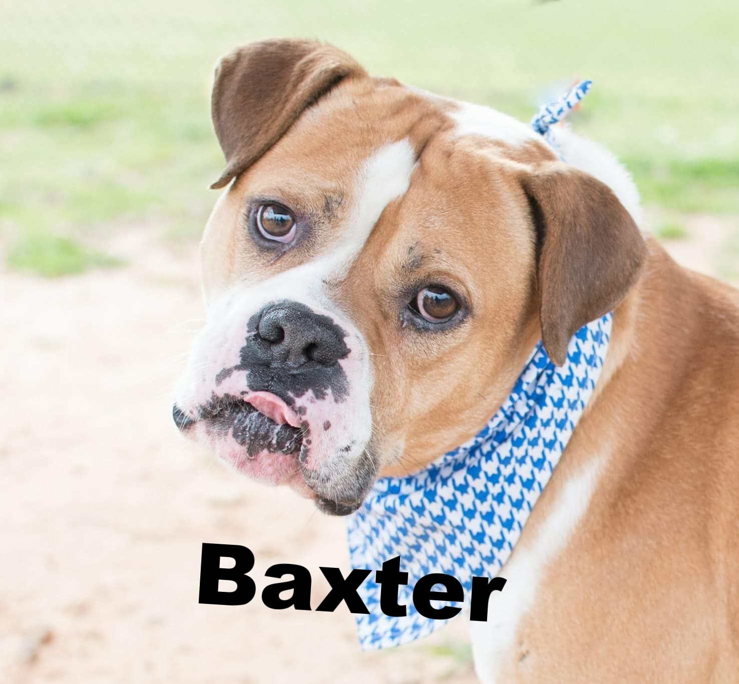 Baxter.jpeg