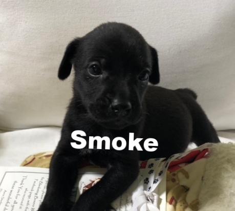 SmokeHT.jpg