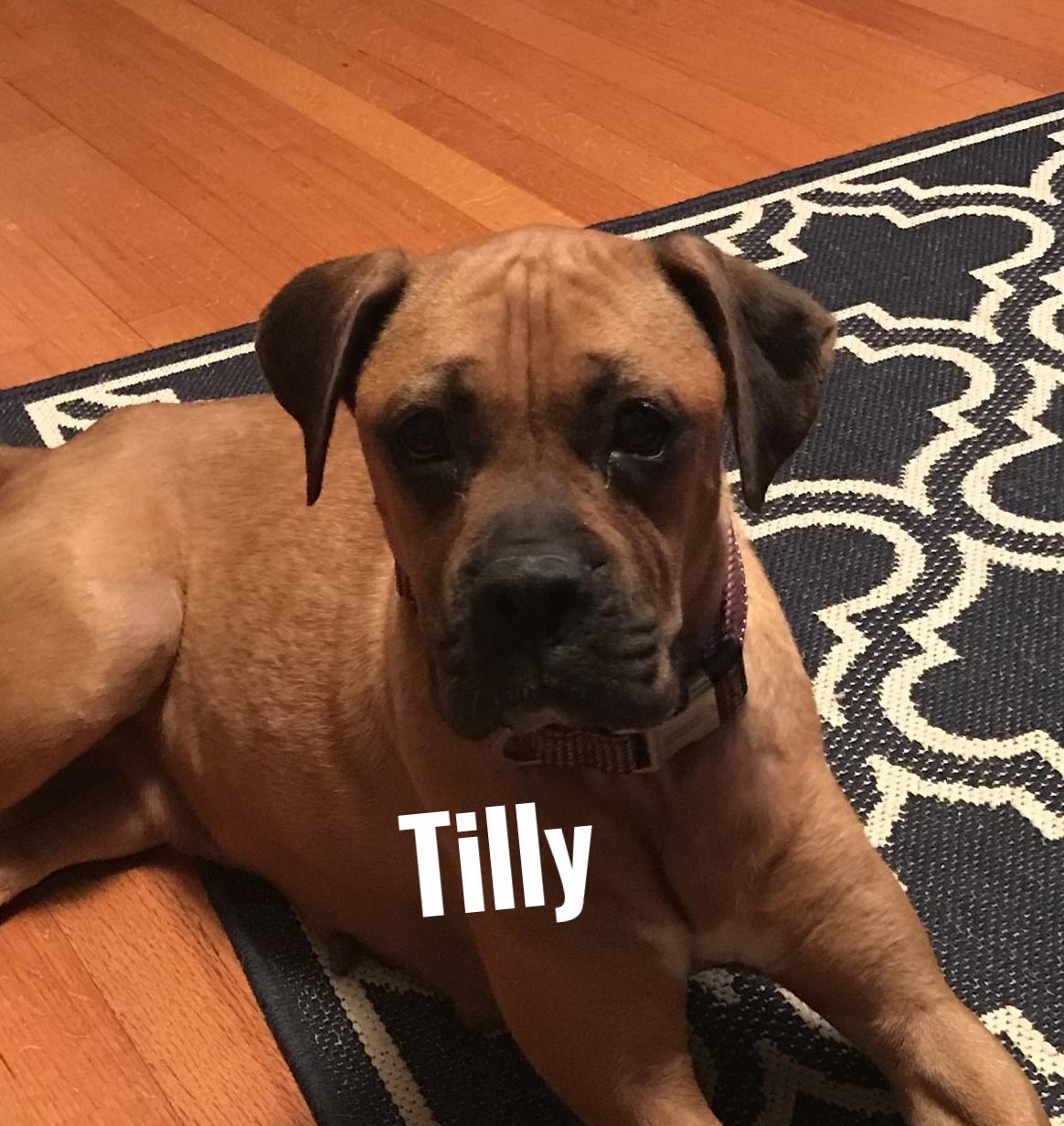 TillyHT.jpg
