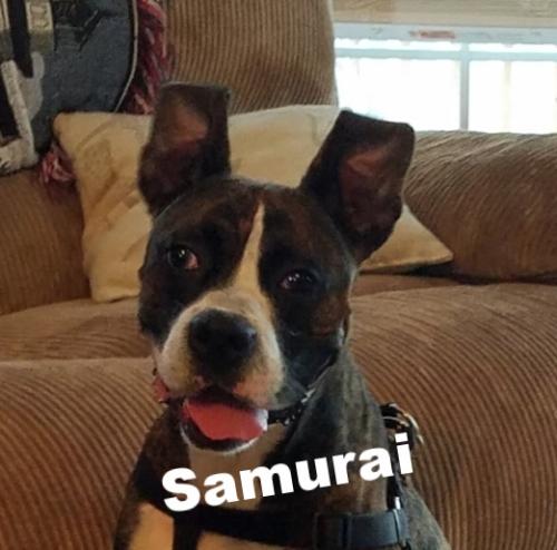 samuraiHT.jpg