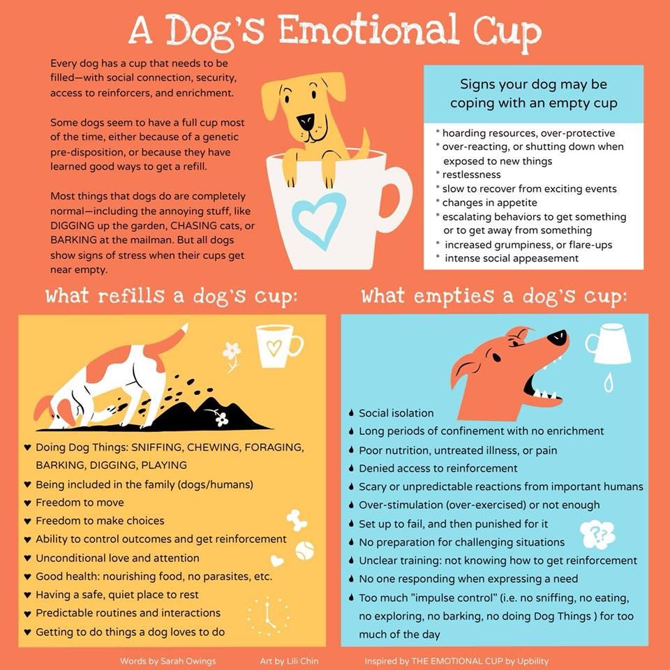 DogsEmotionalCup.jpg