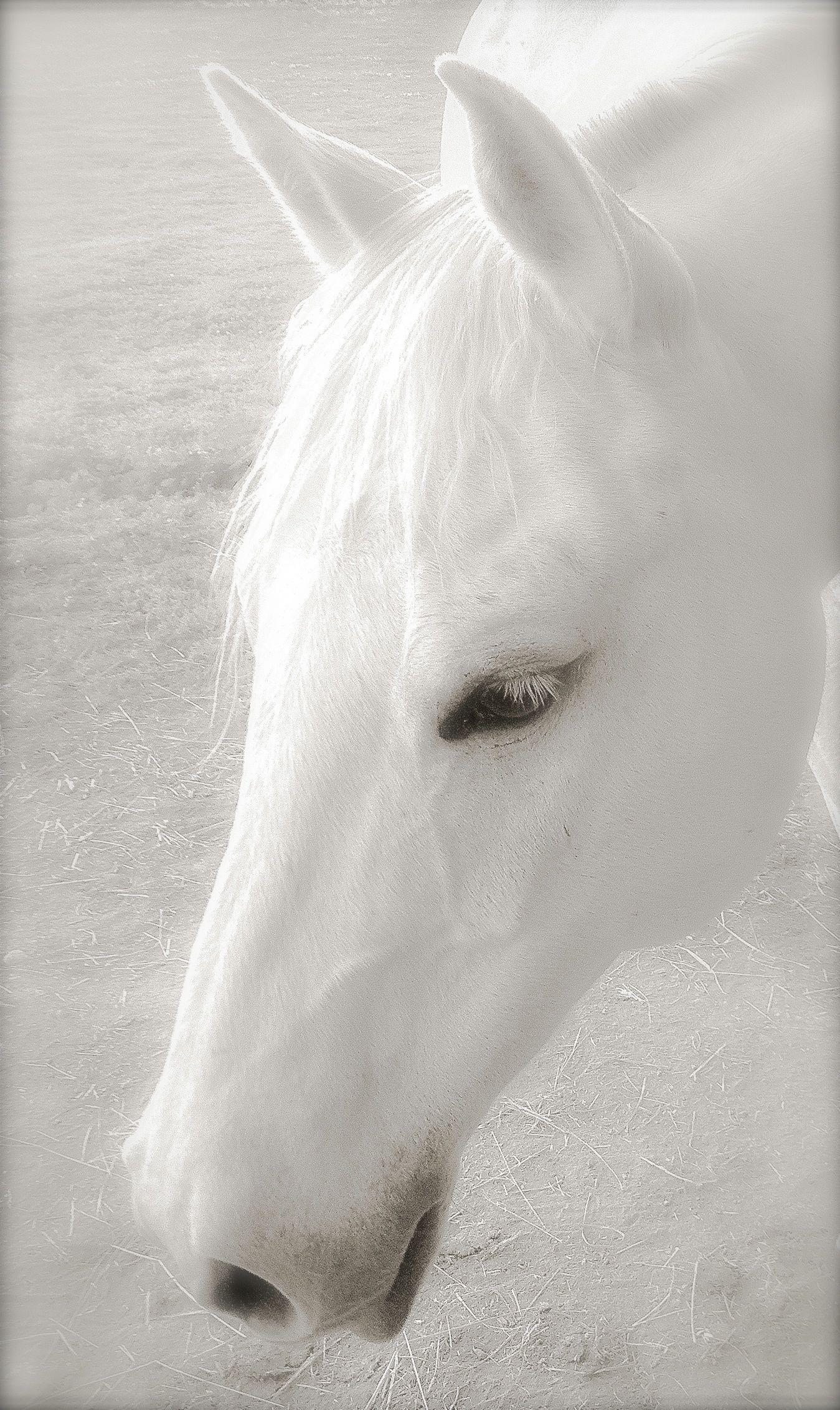Maisy - Head Shot in White Magic copy.jpg