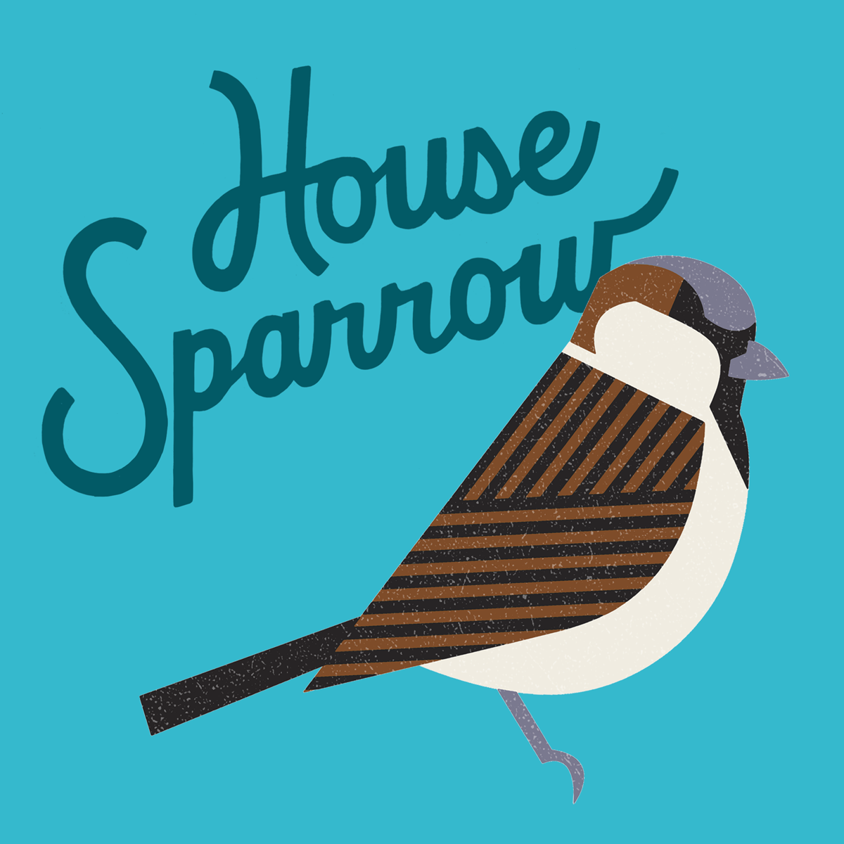 housesparrow.png