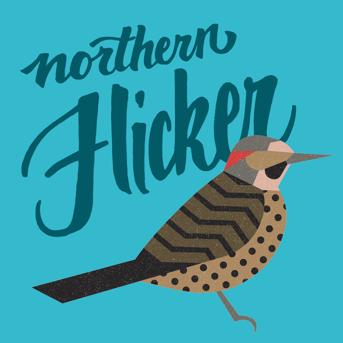 northernflicker.png