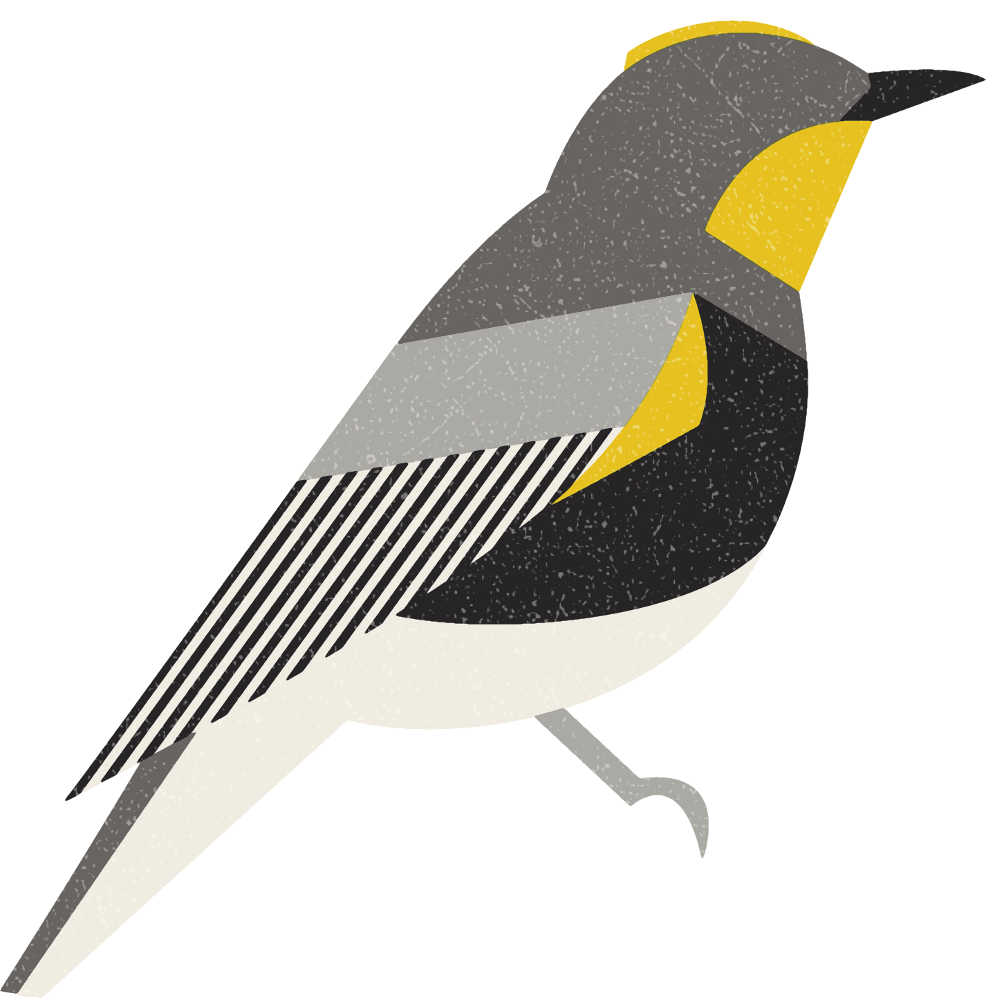 yellowrumpedwarbler.png