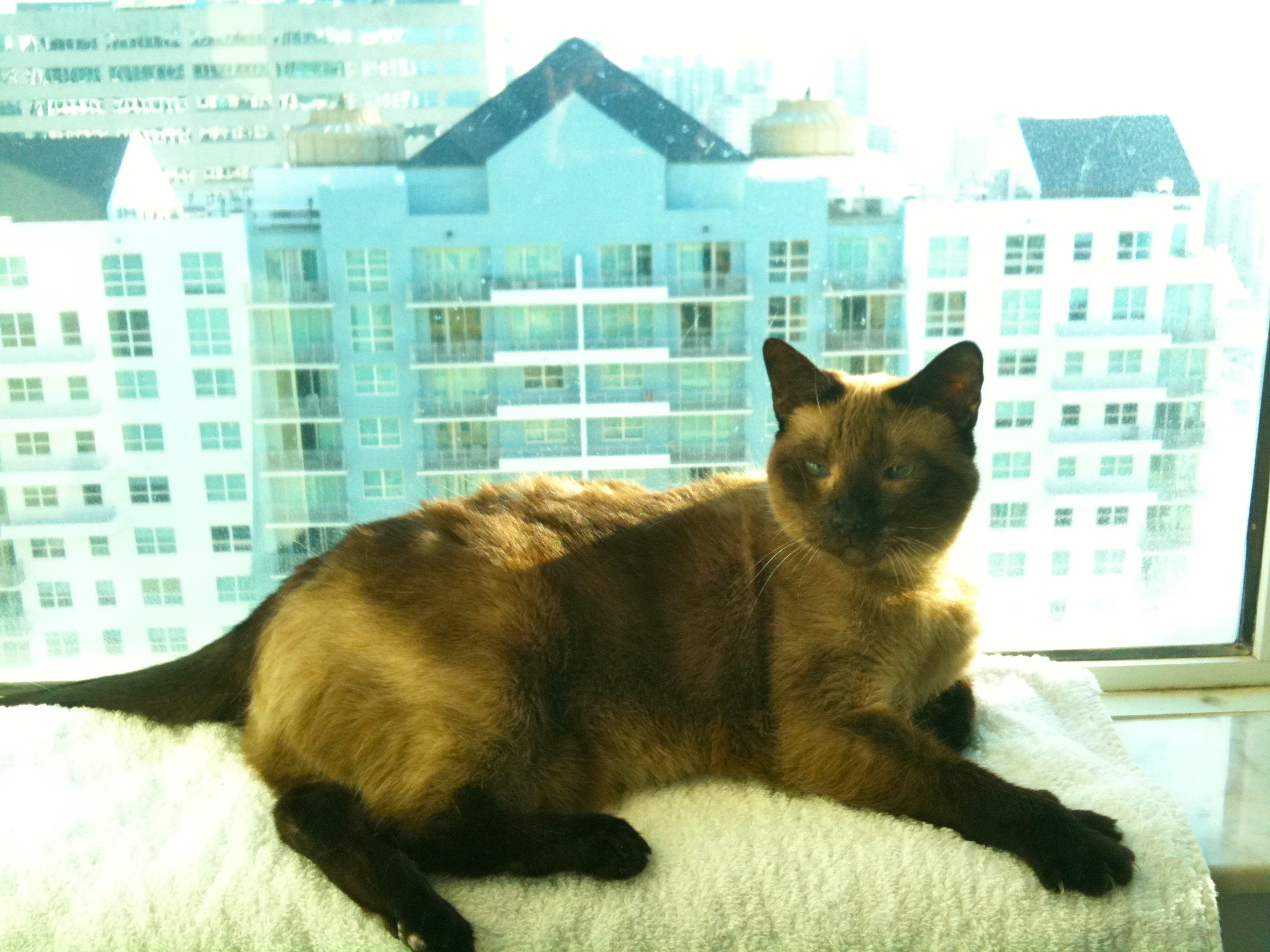 Isabella as a 12-year old lady, taking the sun from her 36th floor window. May 28, 2010, iPhone 3G.