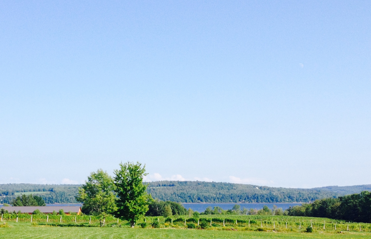 The vineyard and the Washademoak.jpg