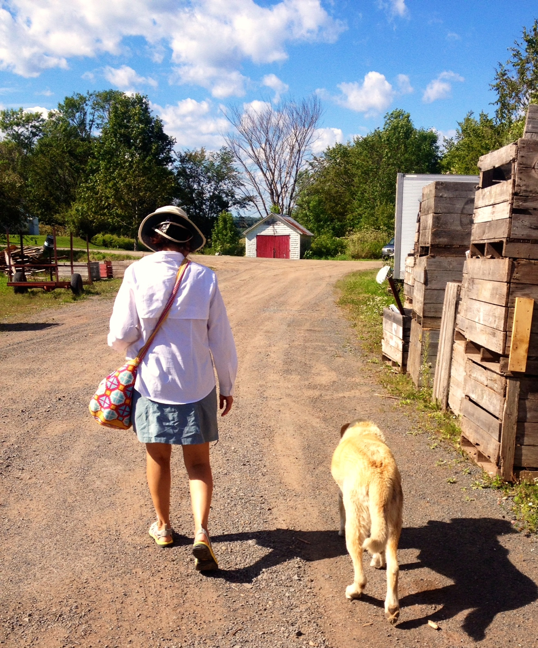Brenda's dog decided to walk us from the Gagetown Cider Company's   warehouse to our Zodiac, which we had left at Fox's Wharf, right at the entrance of the orchards.  Remarkably, he waited at the wharf until we tied off, then immediately he got up and went home.
