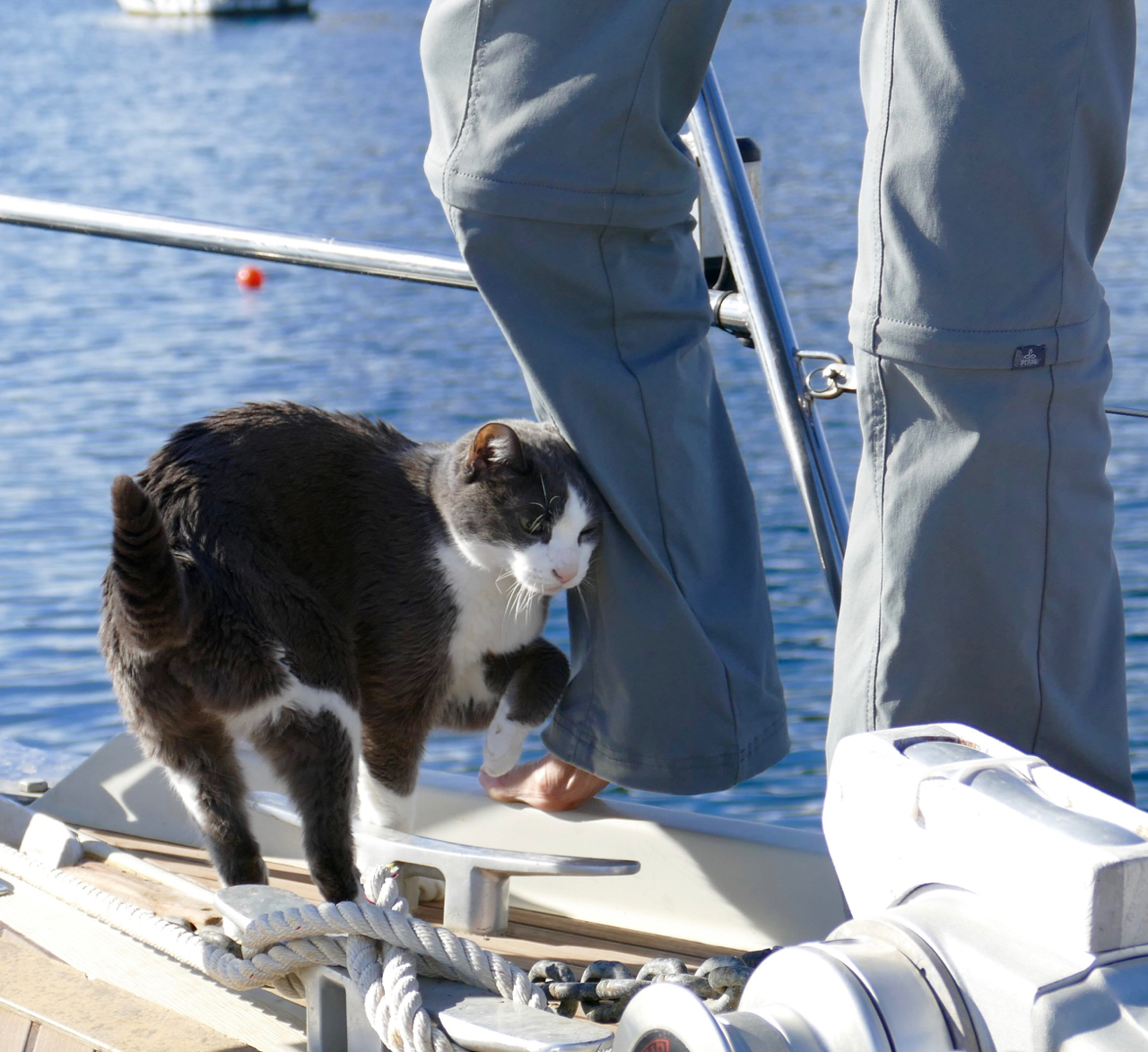 The Admiral doing foredeck work, and so of course, Sebastian was there with her. Águilas, Murcia,January 21, 2016. Leica Typ 114.