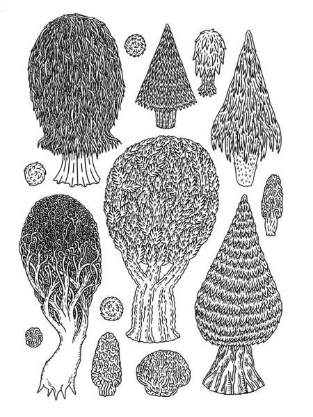 Ramsey_trees_8p5x11.jpg