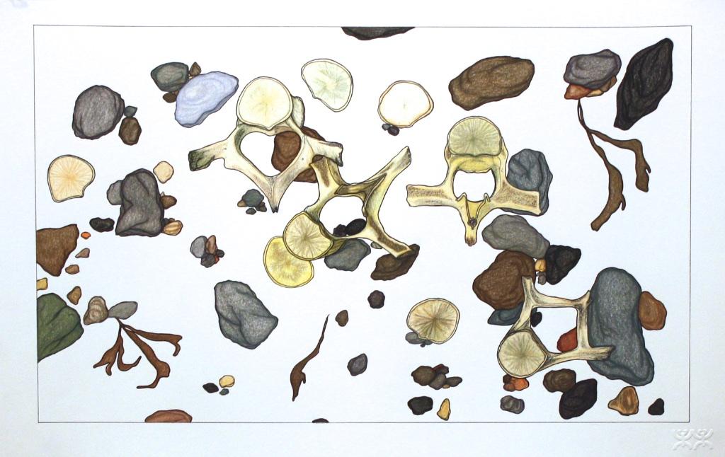 Washed Up Bones (196-0231)<Br>Pudlo Samayualie<Br>15 x 23<Br>Coloured Pencil on Paper<Br> SOLD