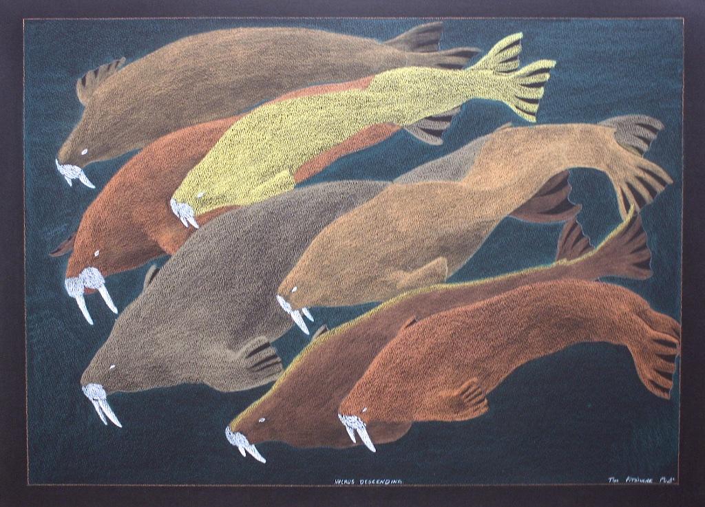Walrus Descending  23x30  Graphite, Colour Pencil and Ink  SOLD