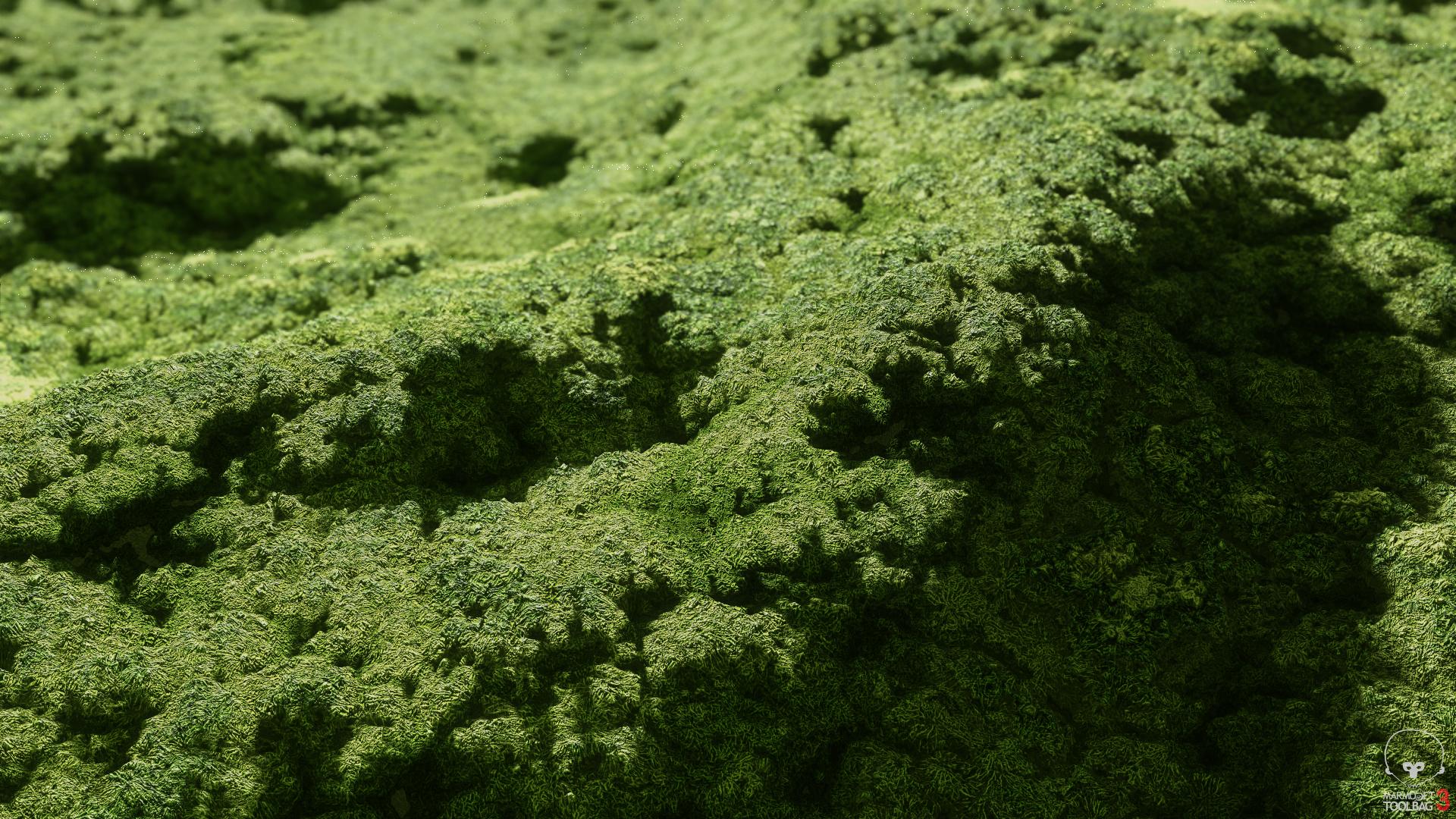 MossGeneric_02_Applied_Wide.jpg