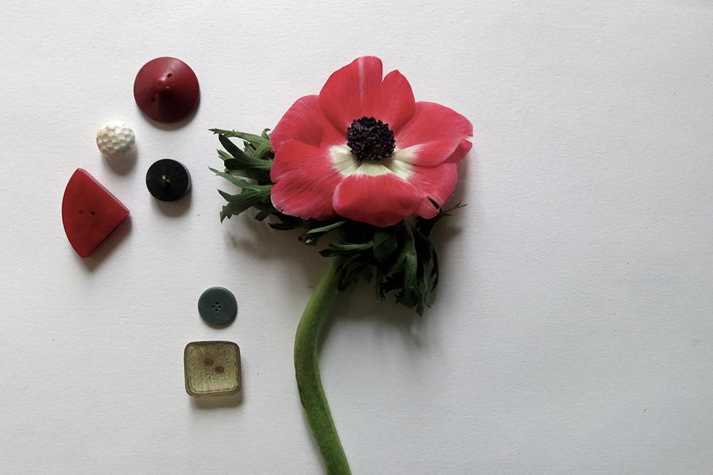 anemoneLOW.jpg