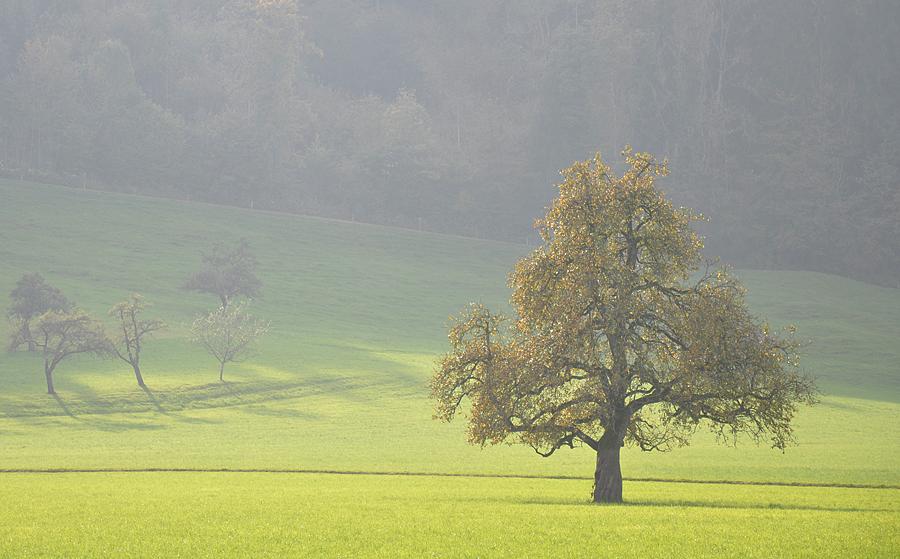 sunset tree (c) mark somple 2014