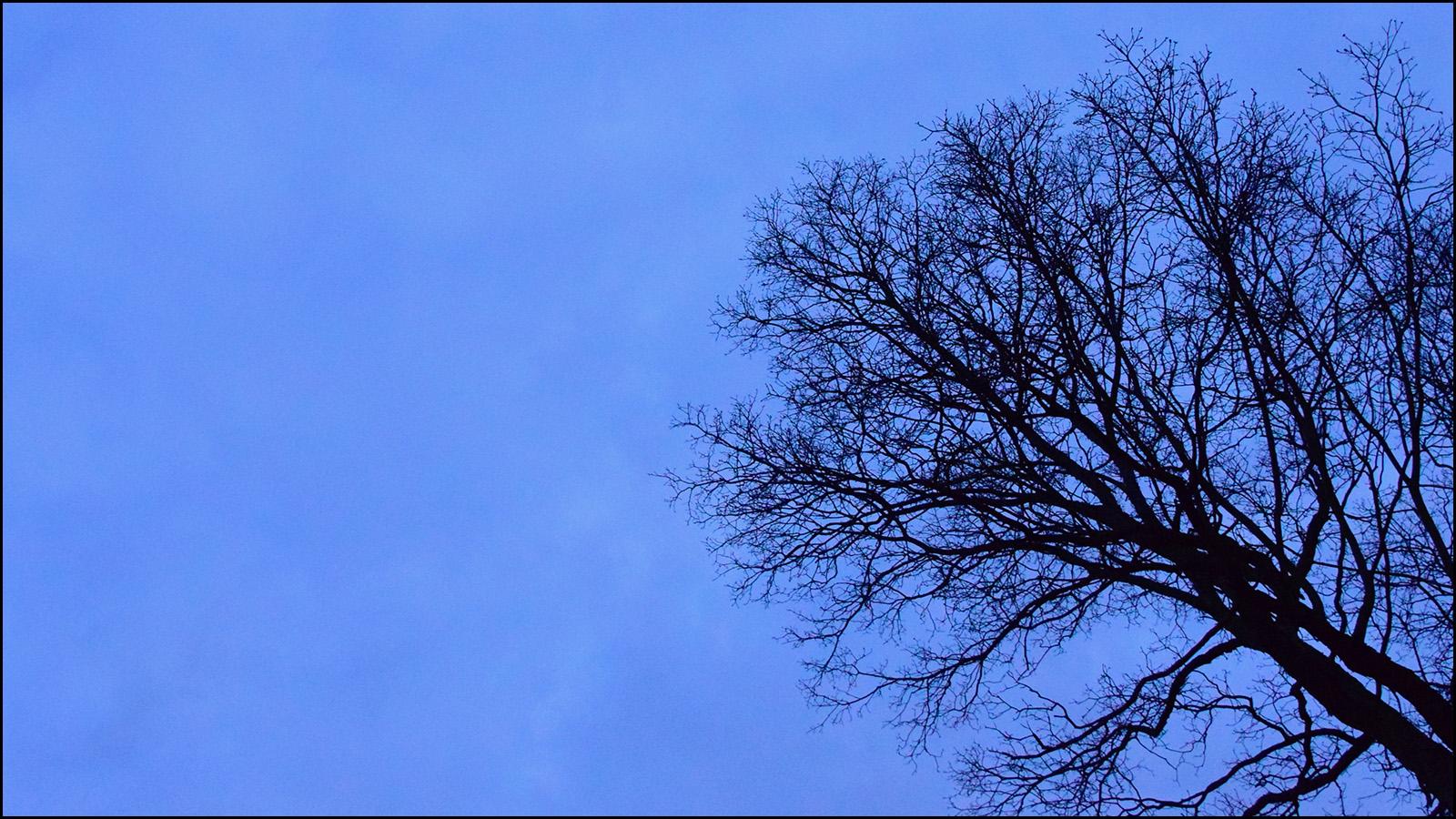 tree at dusk (c) mark somple 2019