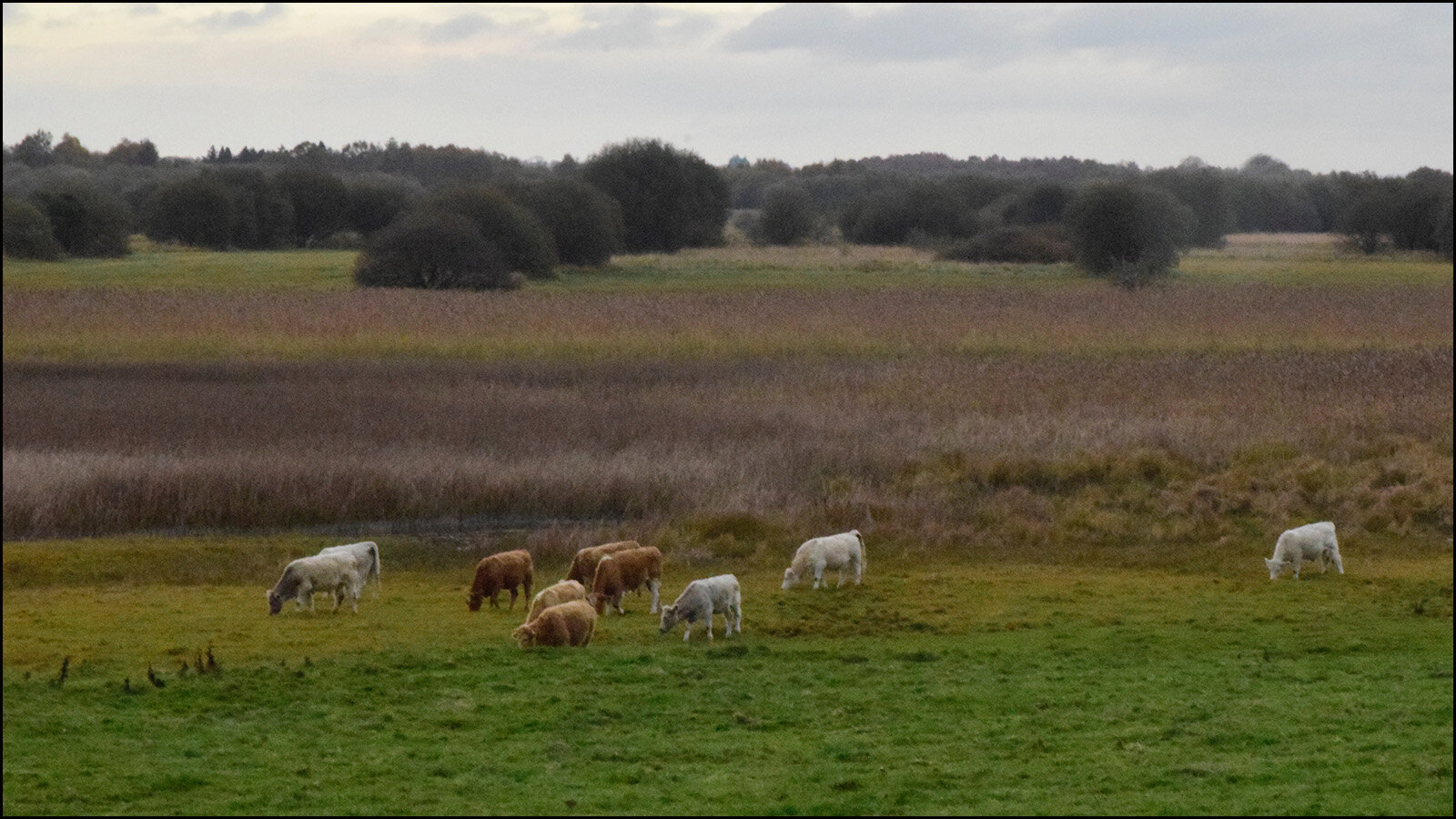 Clanmacnoise - where hundreds of years of turmoil now allow for peaceful pastures (c) mark somple 2019