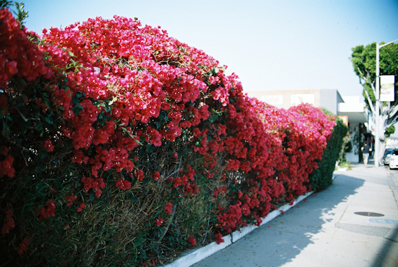 Becky Rui Los Angeles Melrose Venice-001.jpg