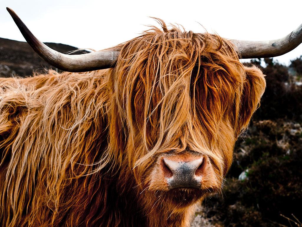 people-cow.jpg