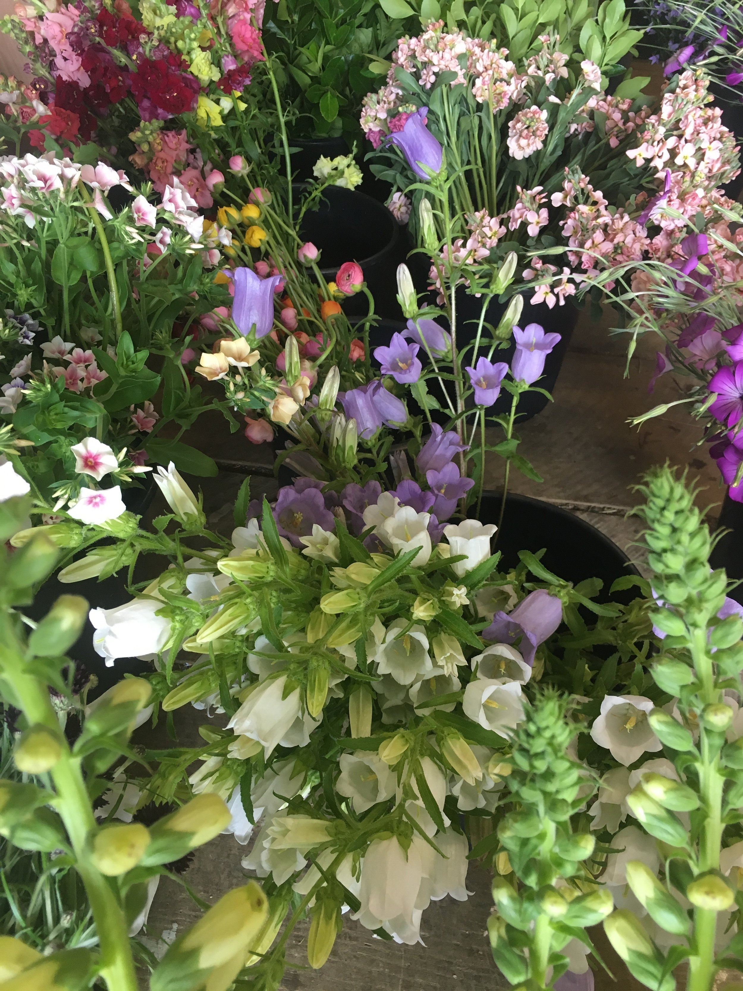 Just a few of the stunning flowers harvested on Wednesday morning.